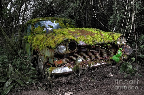 Abandoned Car covered in Moss. Image Credit: Fine Art America.