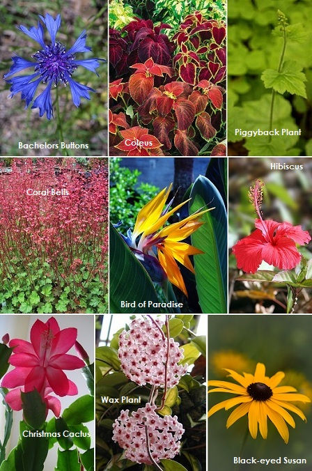 Safe Plants.