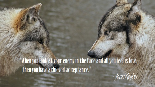 Wolves Face to Face.